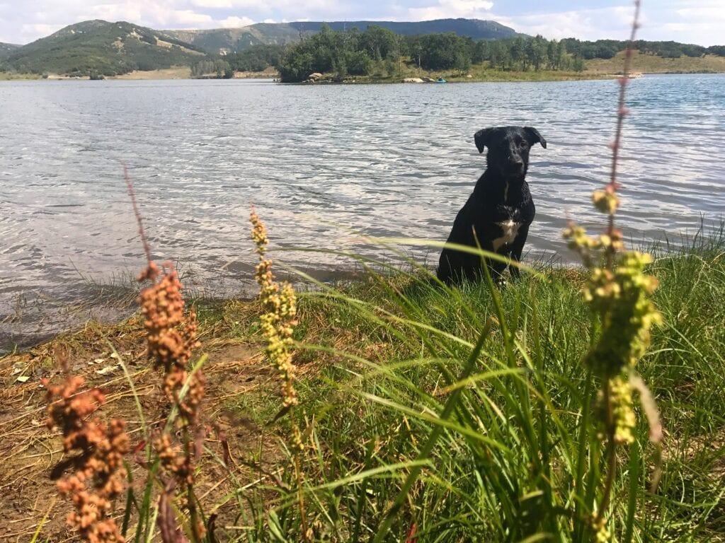 Dog sitting in front of Kolob Reservoir