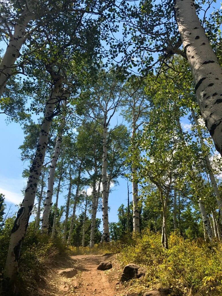 Aspen trees at Kolob Reservoir