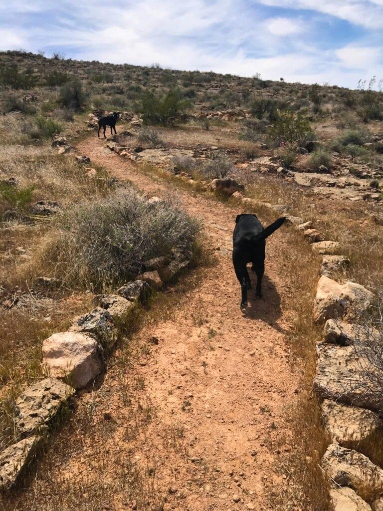 dog on Aspiration Trail, Utah