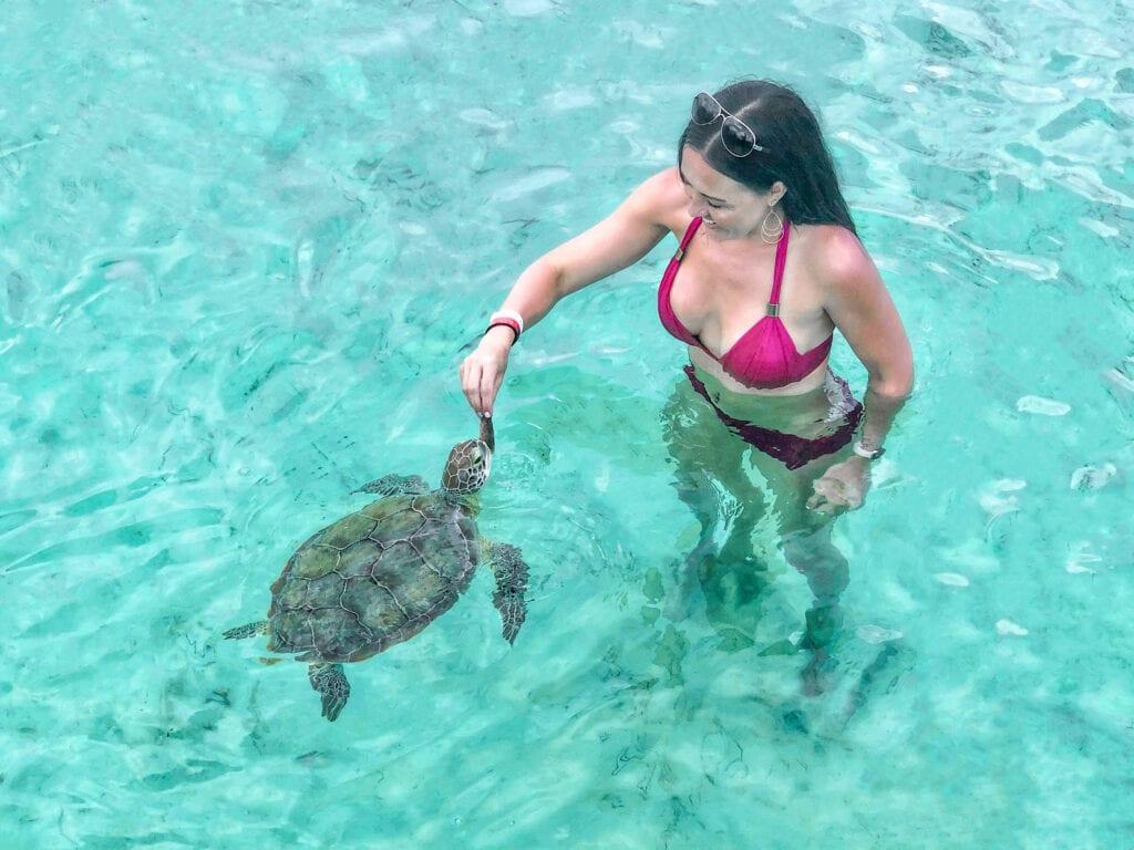 feeding turtles in the bahamas