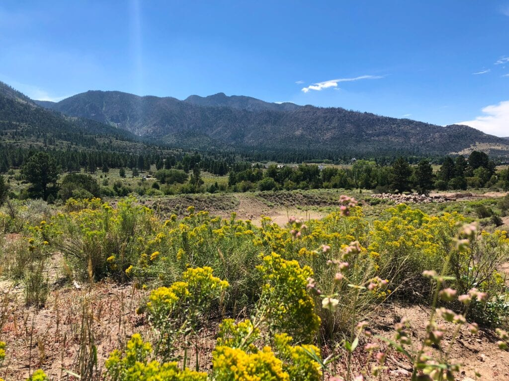 view of pine valley mountains and wild flowers