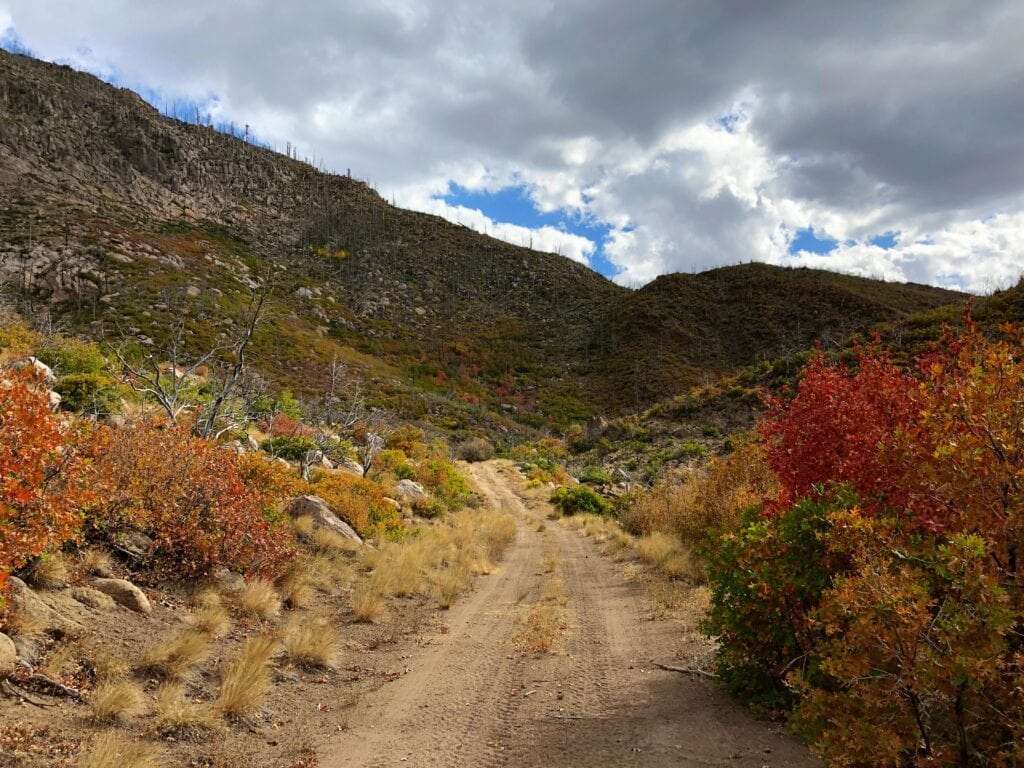 Fall colors in the mountains - pine valley, utah