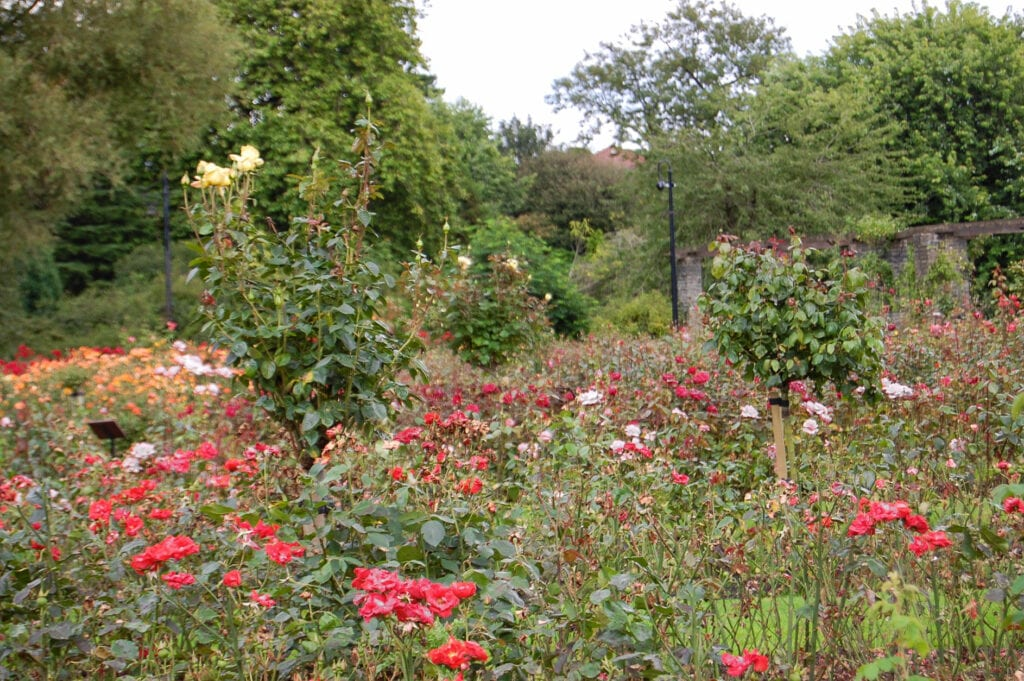 Botanical Gardens in Botanical Gardens in Belfast, Ireland