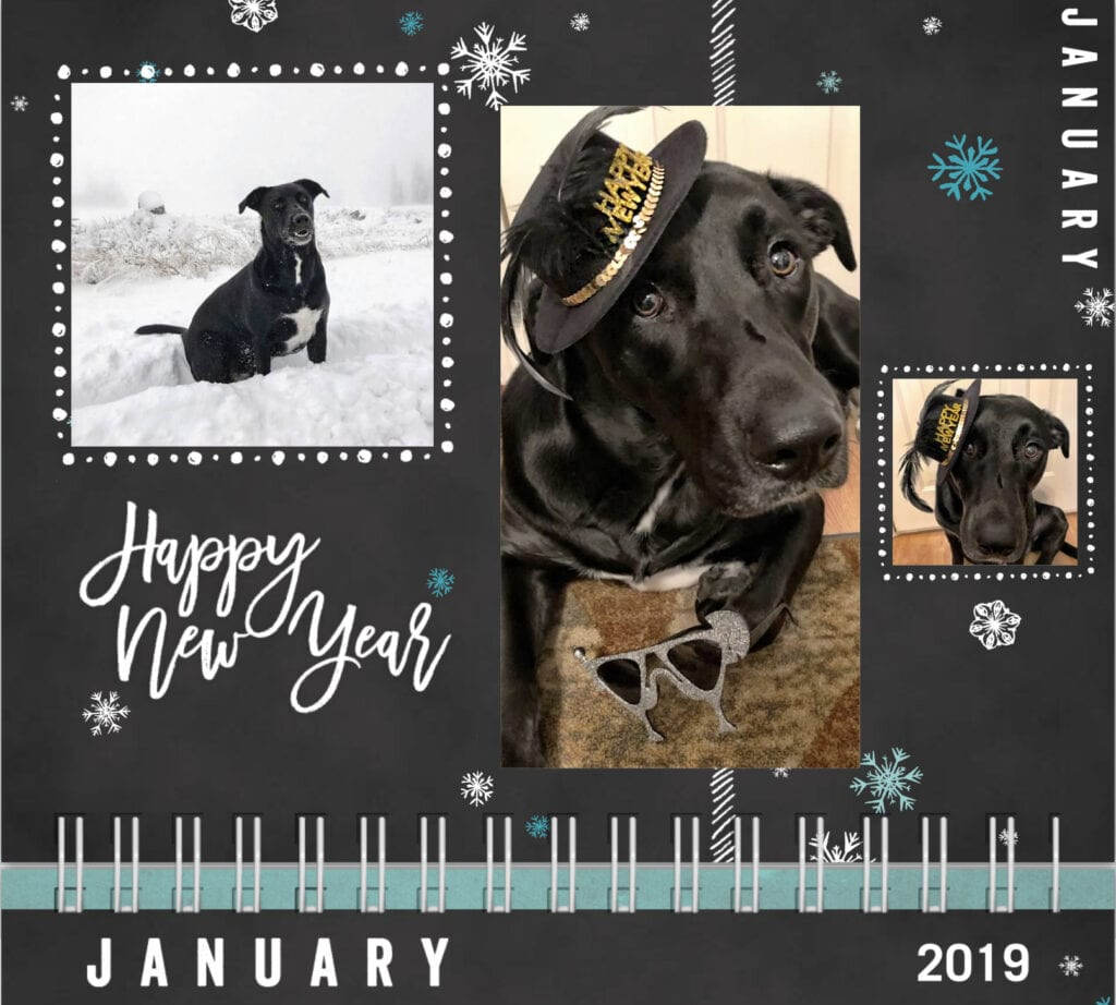 Dog calendar January Happy New Year 2019 Dog with hat, dog in snow