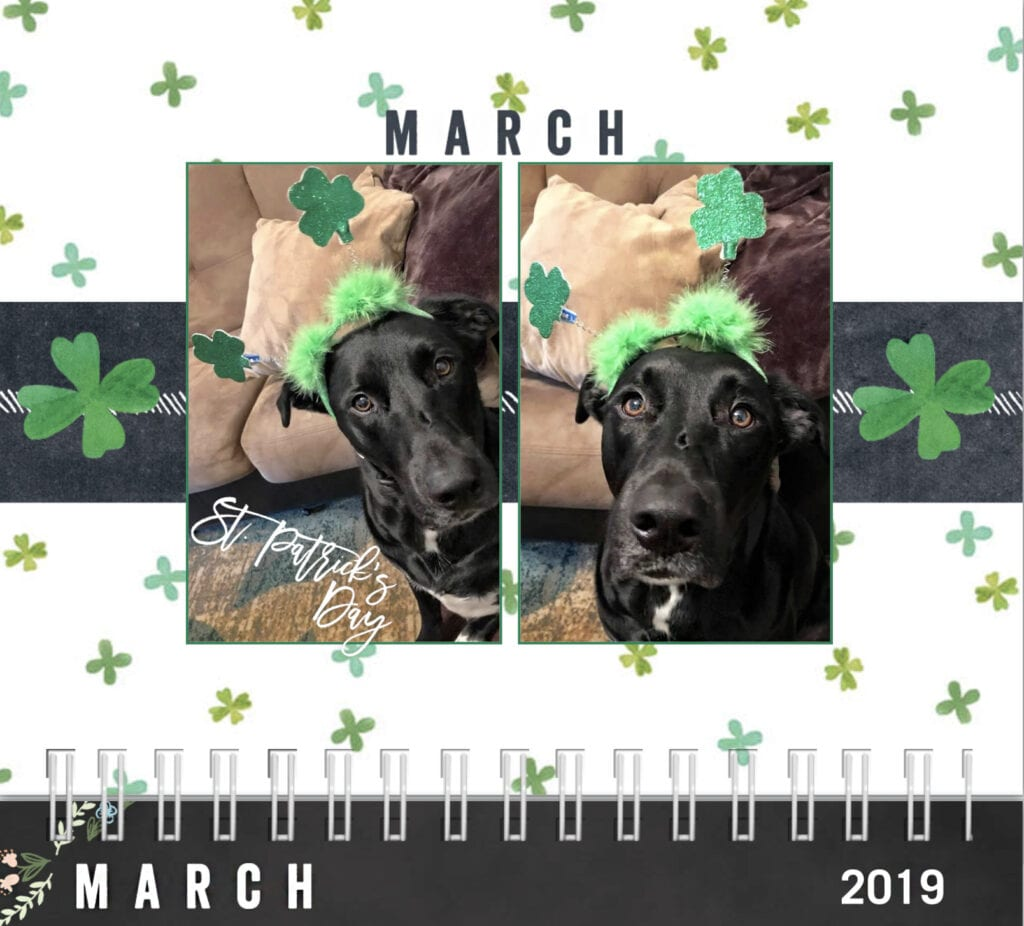 dog calendar 2019 march, happy st patrick's day. Dog wearing festive St Patrick's day headband