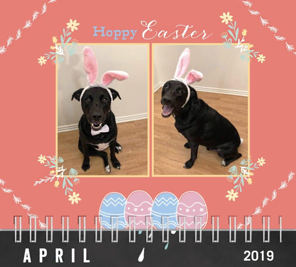 Happy Easter. Dog Calendar 2019 dog wearing bunny ears