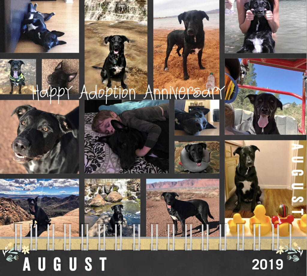 Happy adoption anniversary, dog calendar 2019 collage of dog