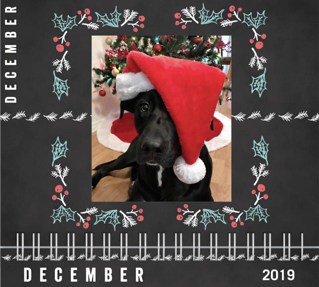 Dog calendar 2019 December, Christmas, Dog wearing santa hat in front of a christmas tree