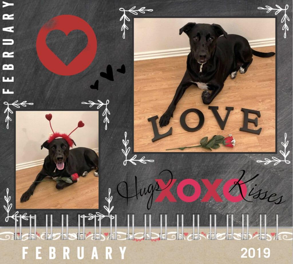 Dog calendar 2019 February love hugs and kisses