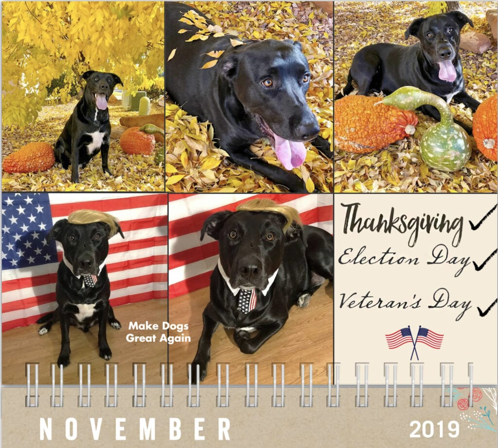 Thanksgiving, dog calendar 2019 election day, veteran's day, dog with pumpkins with fall leaves, dog dressed as President Trump, Make dogs great again