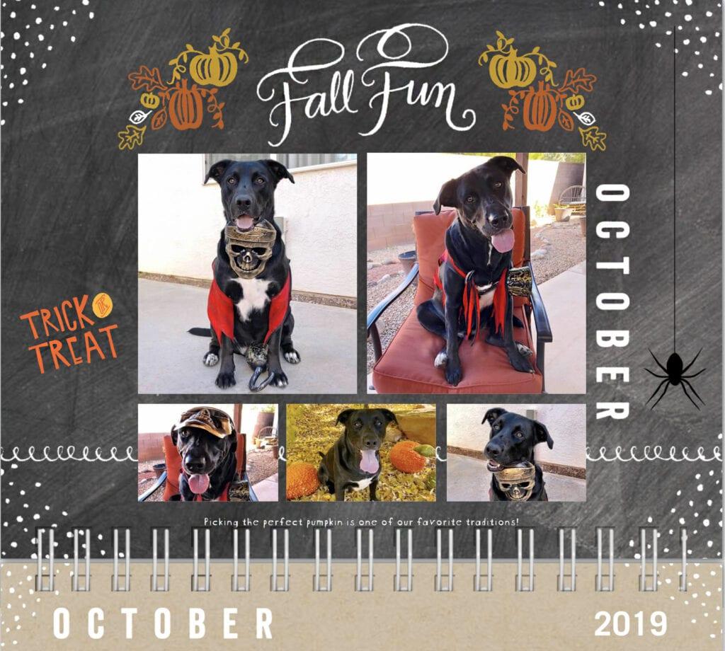 Fall fun, October, Dog calendar 2019 trick or treat, dog in pirate costume, pumpkins