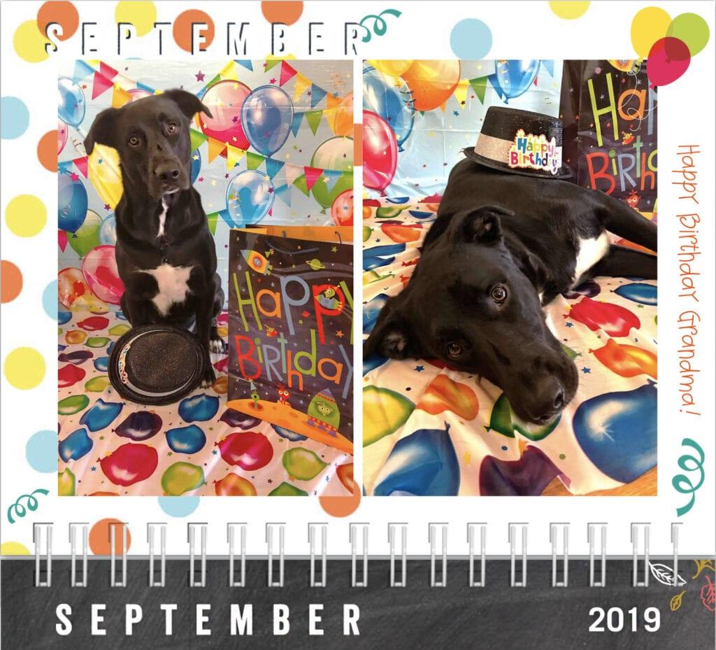 Dog calendar, September 2019 Happy Birthday Grandma Dog with birthday gift hat, presents, and balloon background