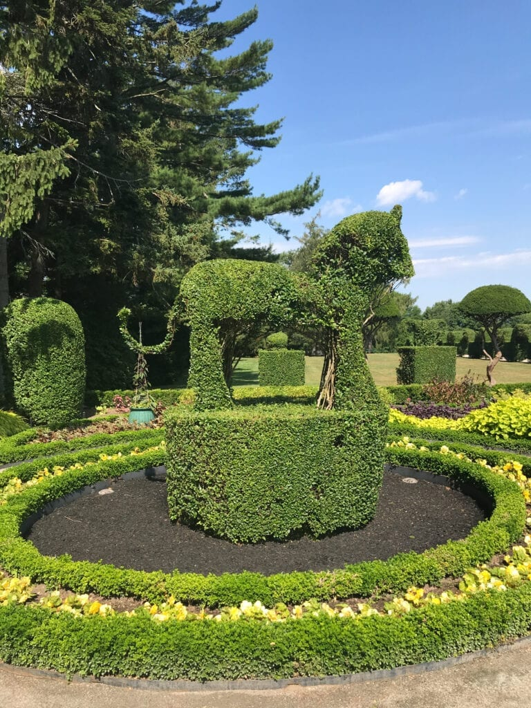 topiary garden, lion shaped bush