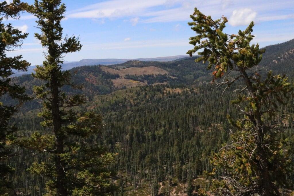 mountain views with pine trees