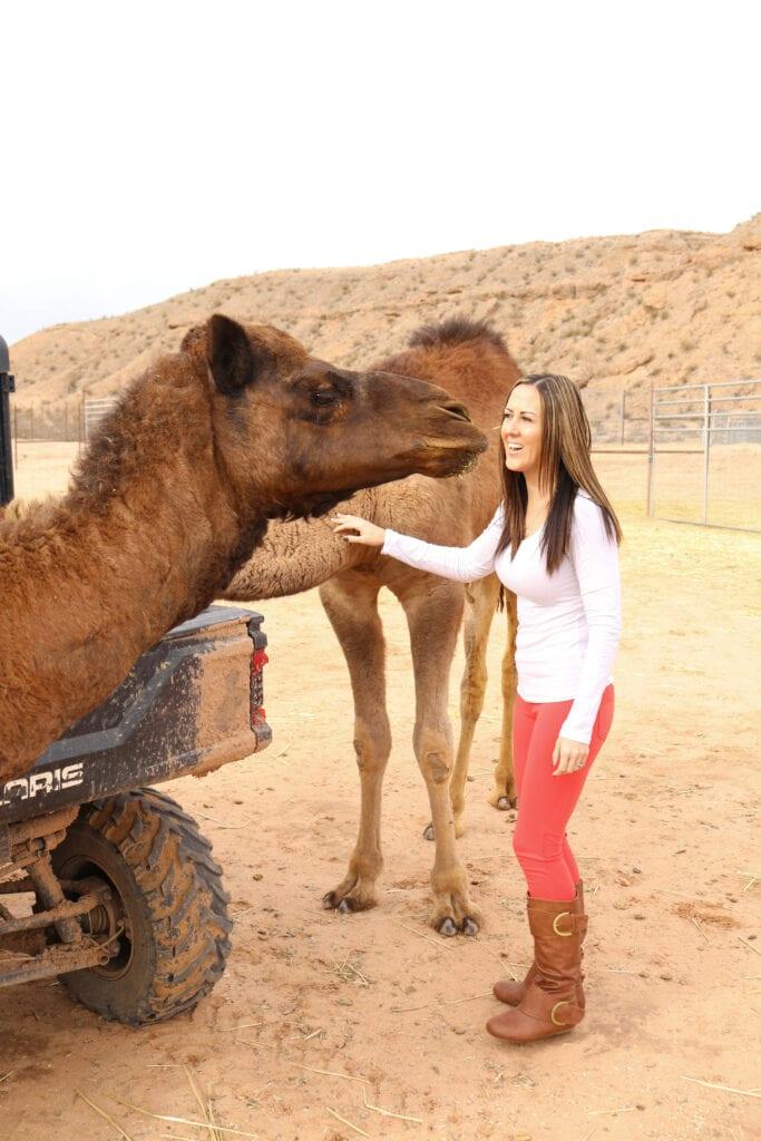 Camel spitting 2