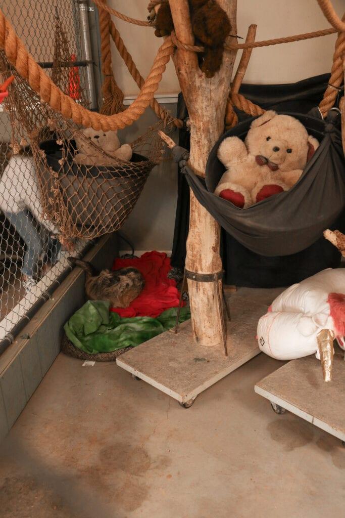 Sloth enclosure 1