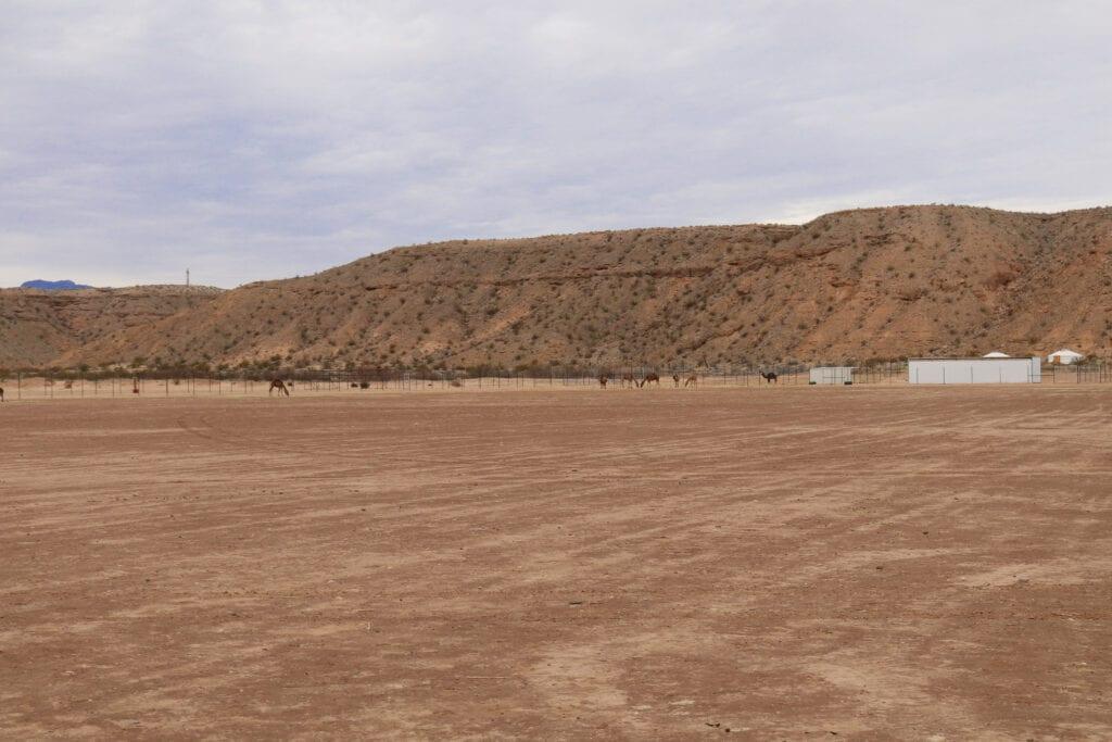 camel grounds mesquite