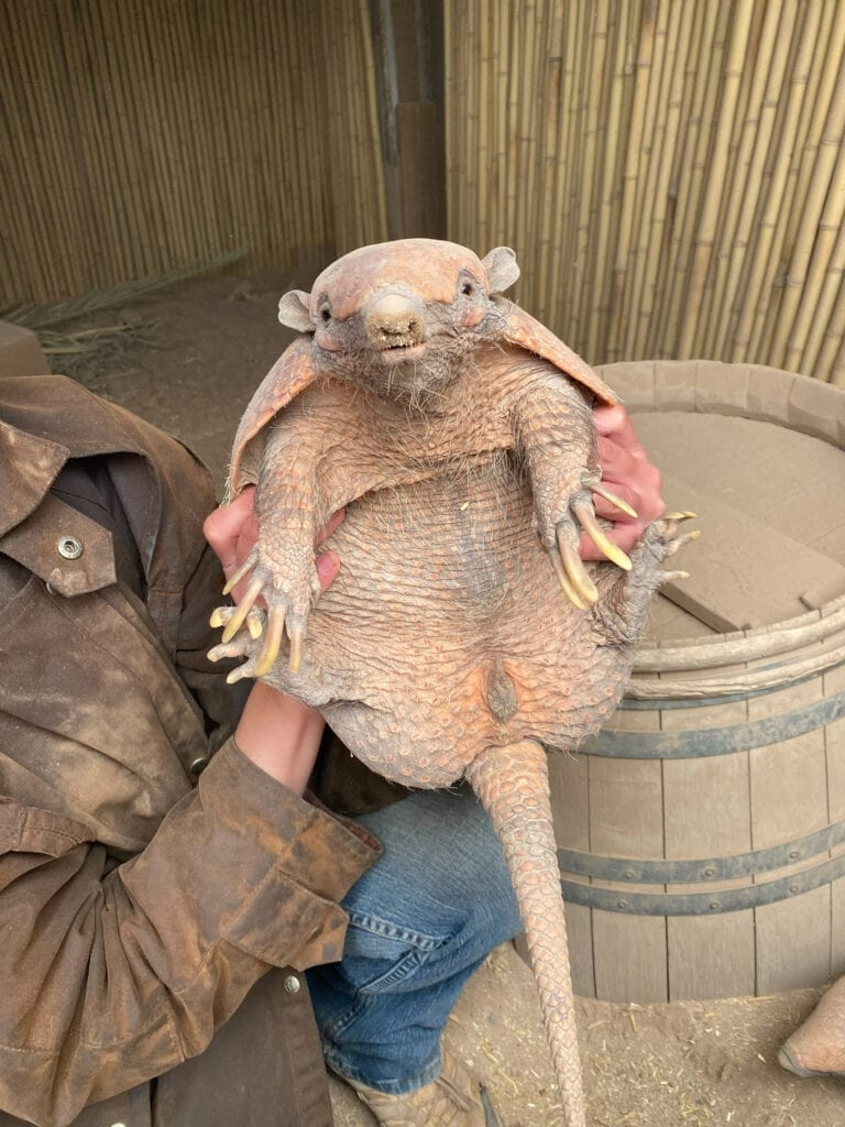 holding an armadillo