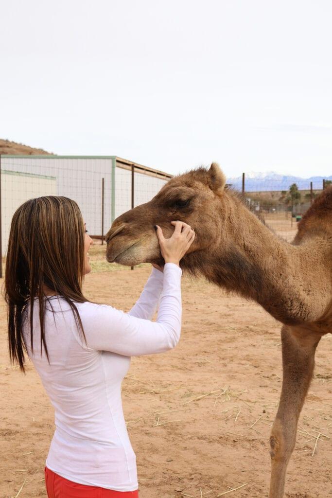 kissing a camel safari