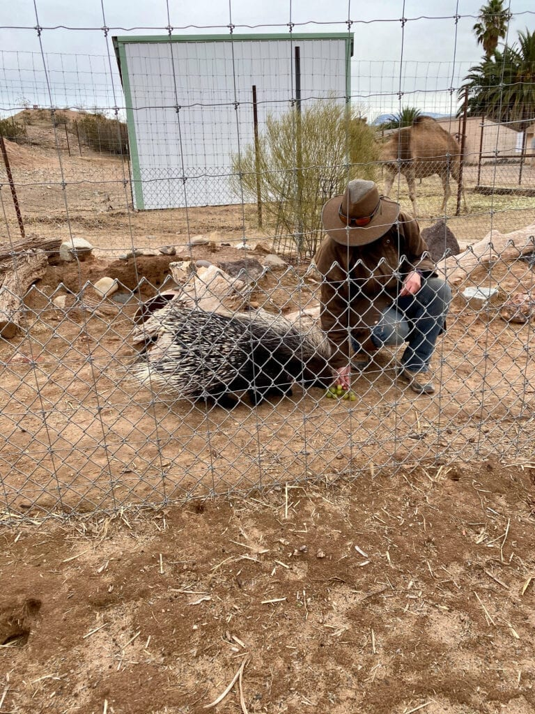 porcupine with trainer
